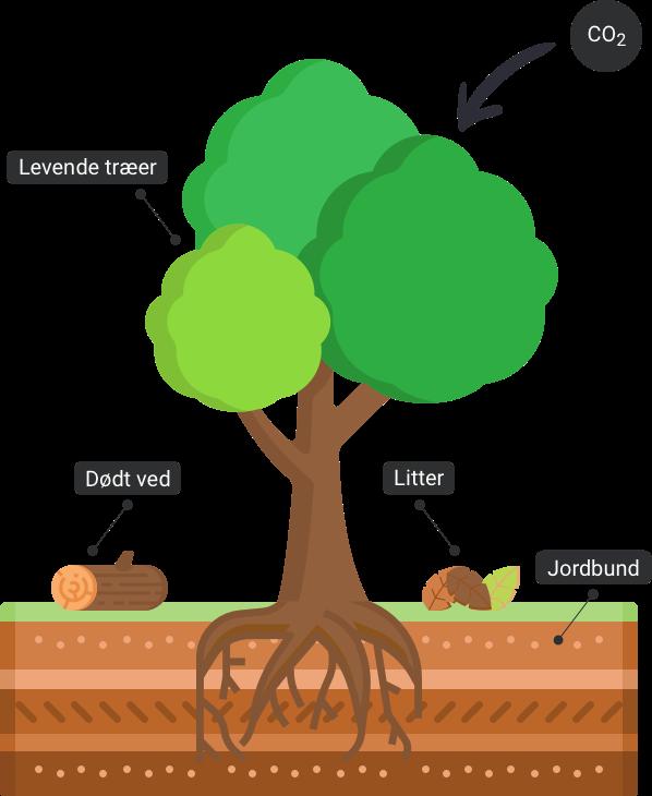Skovkortet CO2 træer skov binding