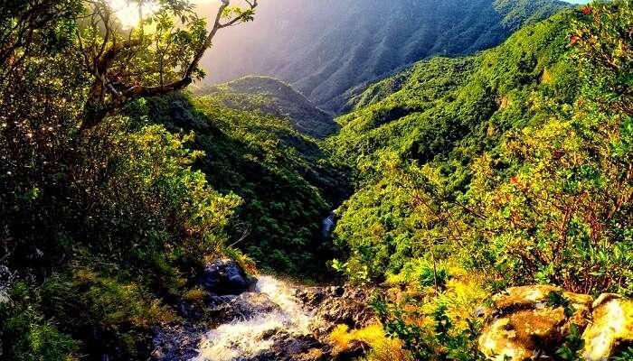 Black River Gorges National Park