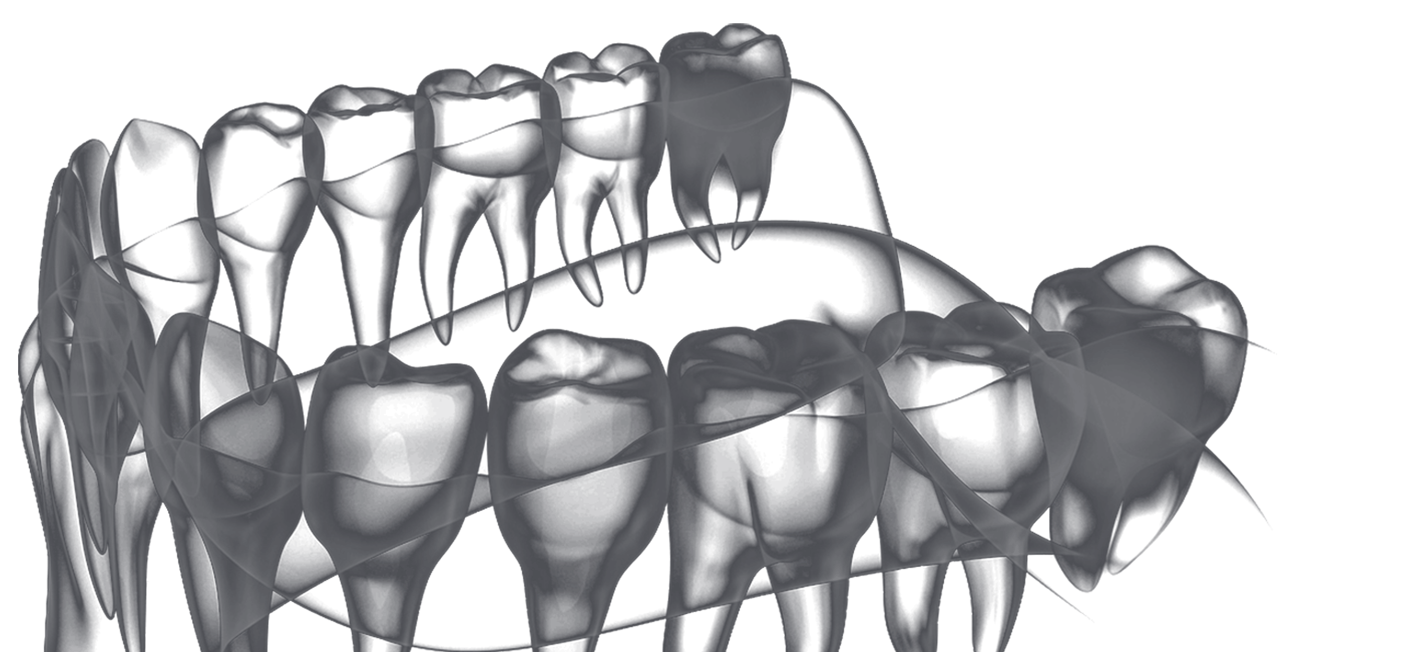 Teeth without background