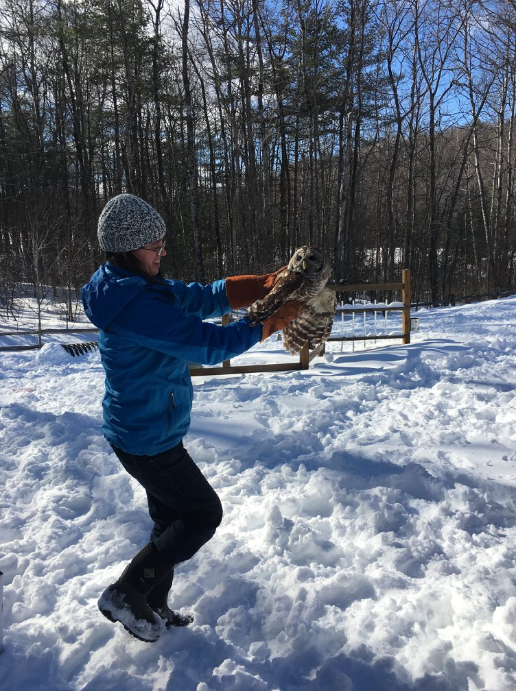 VINS staff release owl into nature