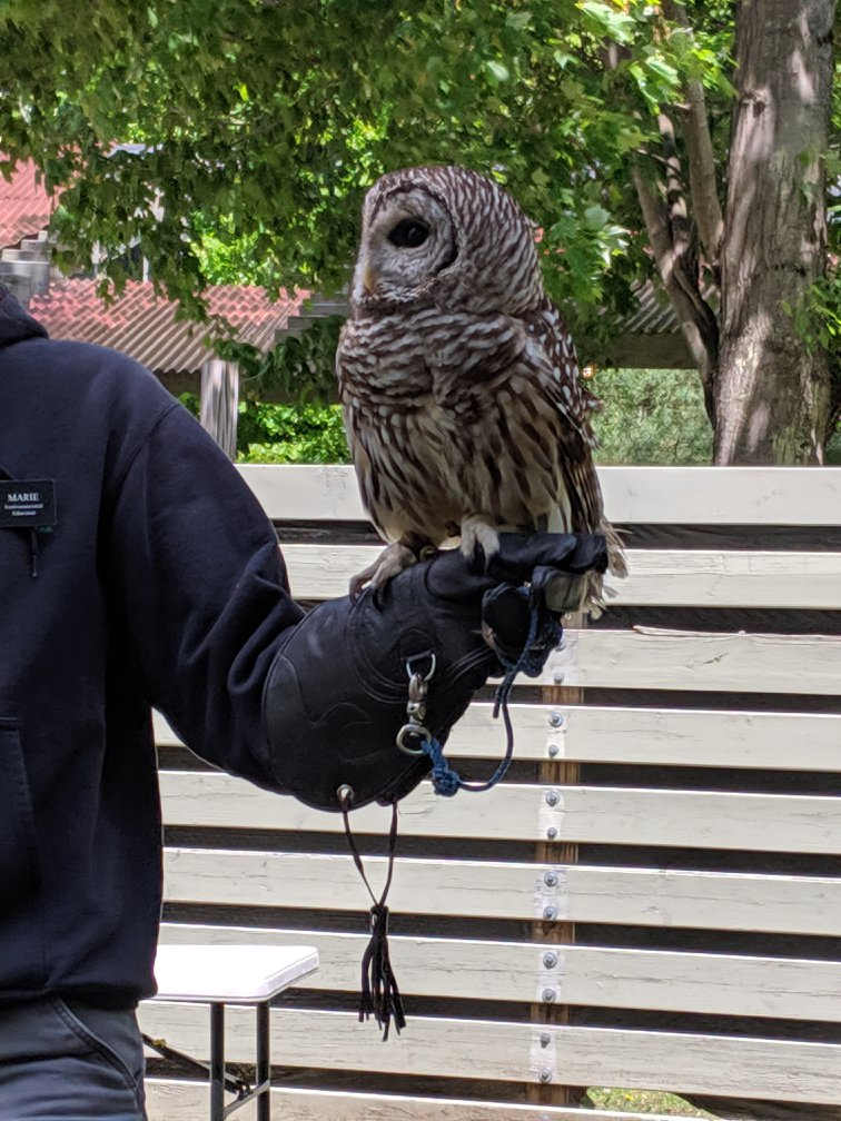 owl perched on man's outstretched arm