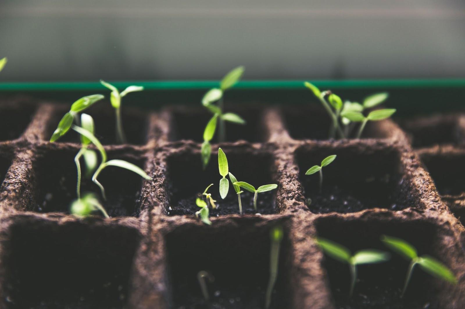 Impact Investing et Foodtech
