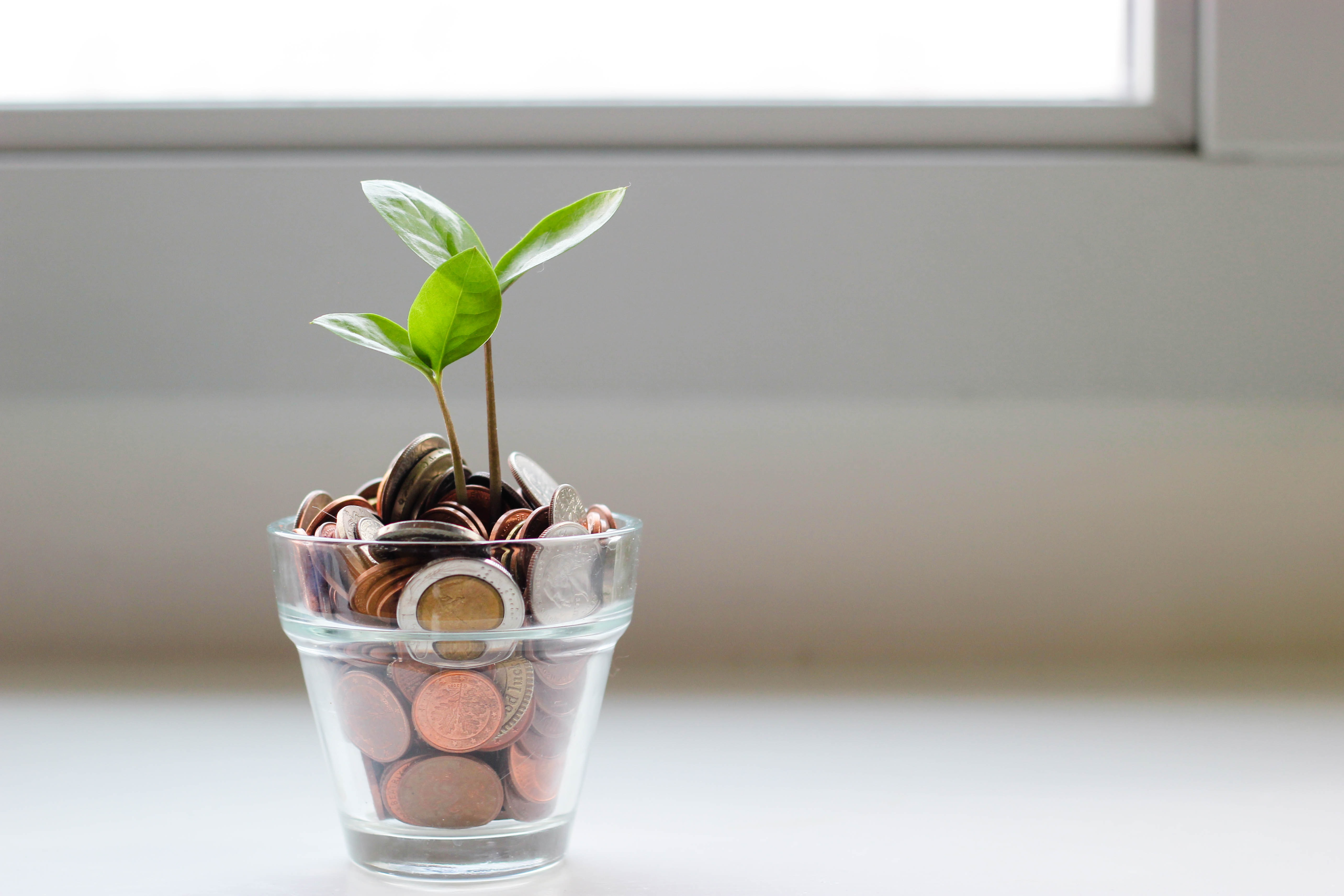 Is infinite growth worth it? The search for a holistic approach to business