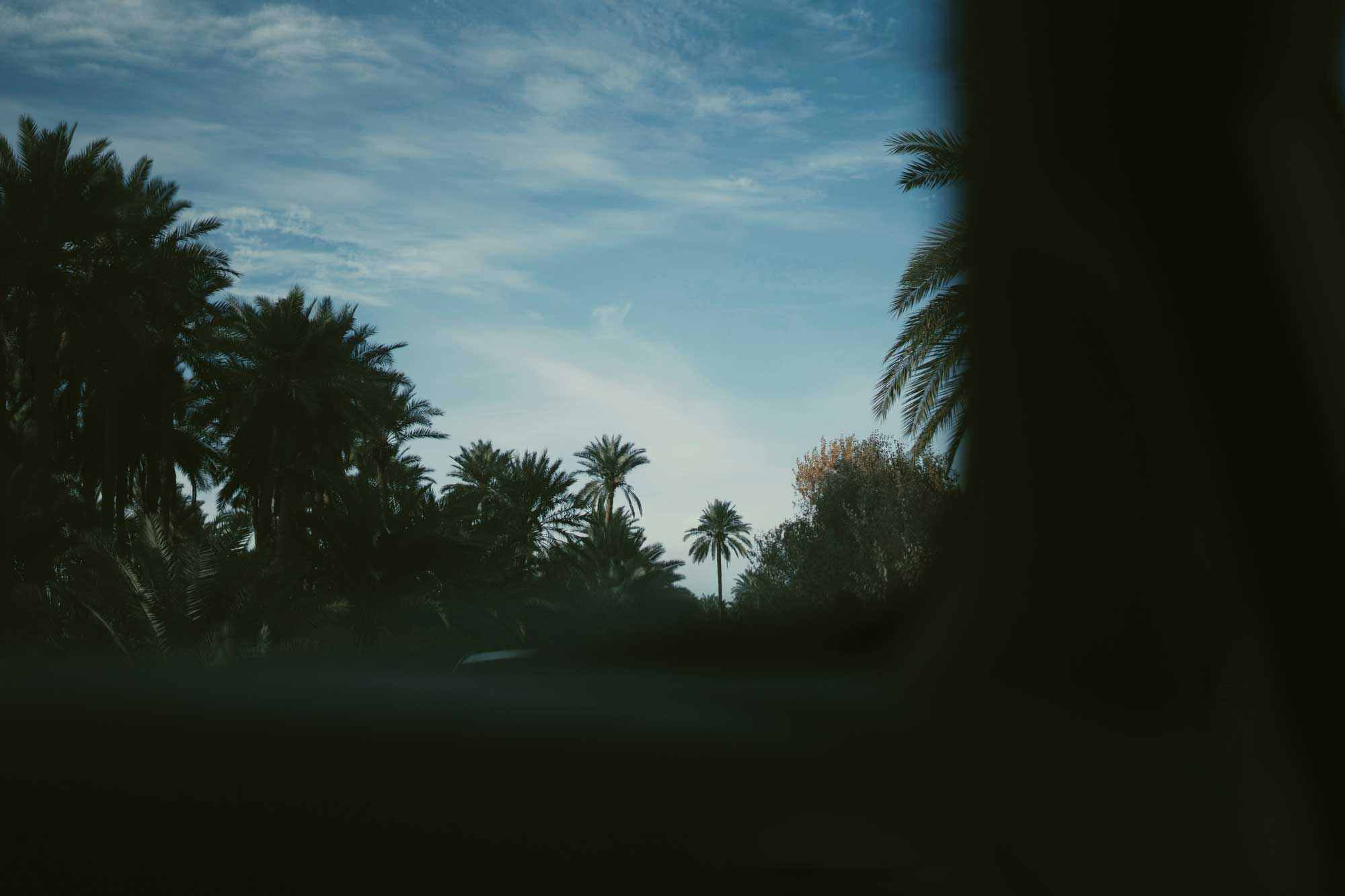 A picturesque scene of palm trees against a blue sky as seen from inside a car.
