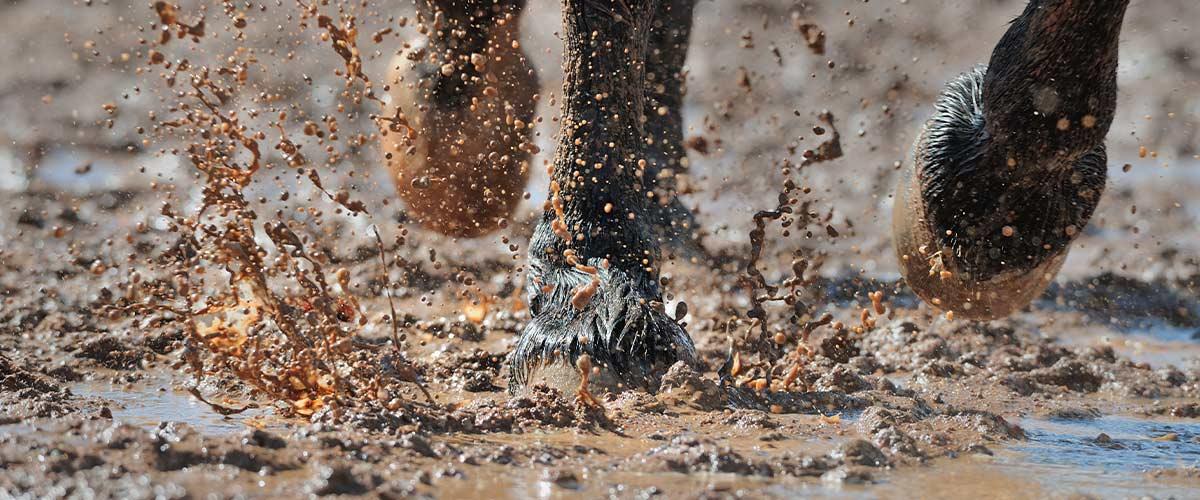 Horse mud fever symptoms