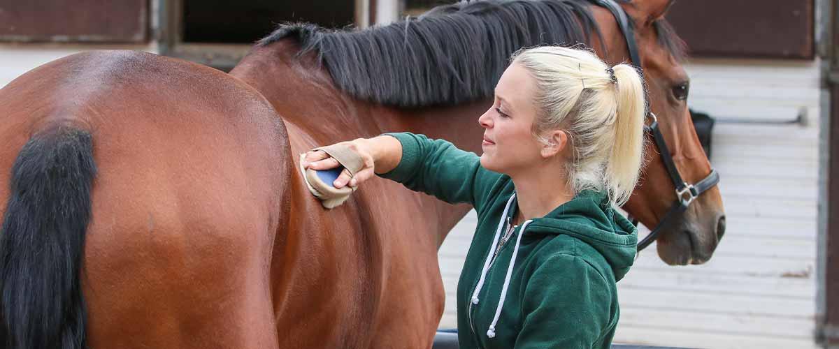 scratches on horses fetlocks
