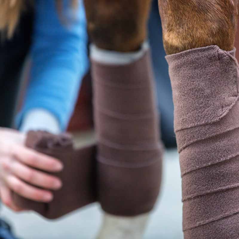 horse wound care supplies