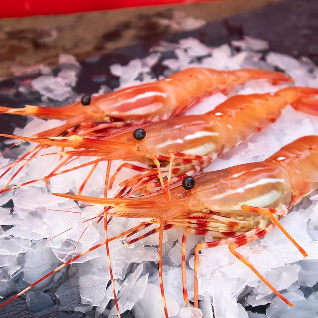 Local spot prawns on ice
