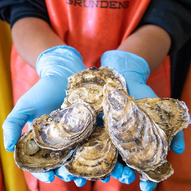 Crew Member holding Oysters