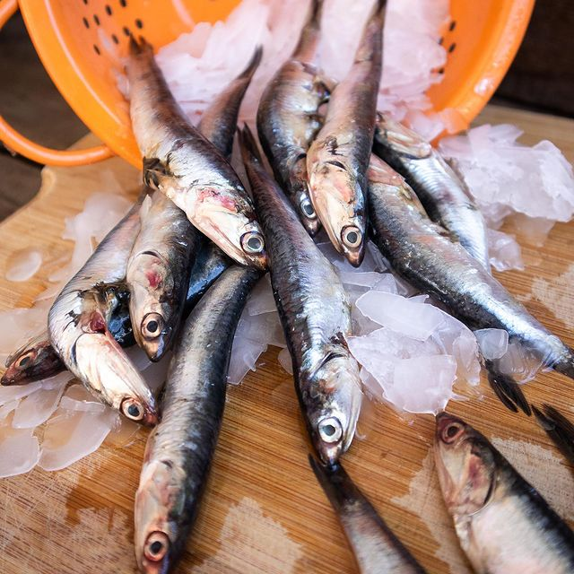 Anchovies on ice