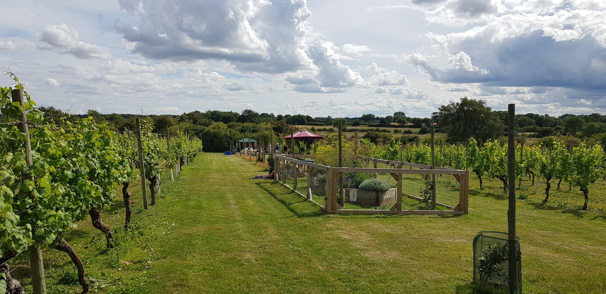 Warden Abbey Vineyard Tours