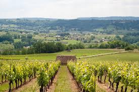 Vignoble des coteaux de Glanes dans la vallée de la Cère