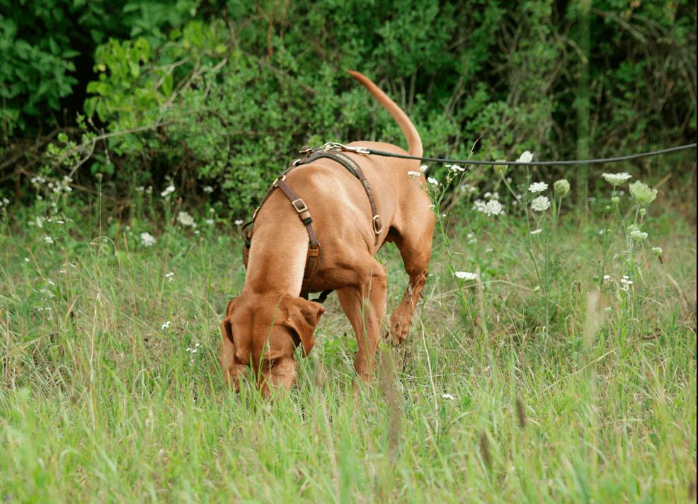 Bilder - Hund