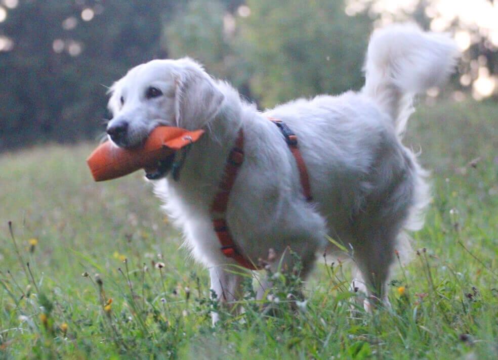 Hund sarah