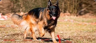 handicaphundetraining