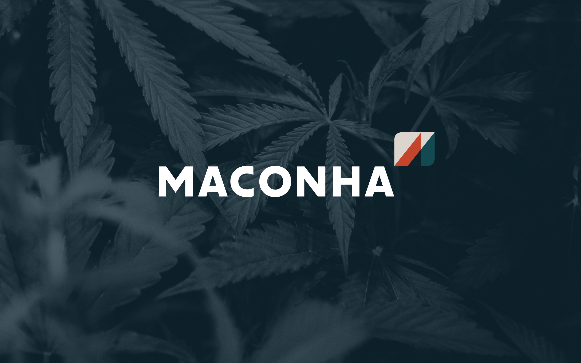 The Maconha wordmark and logo set on a dark green background of cannabis leaves.