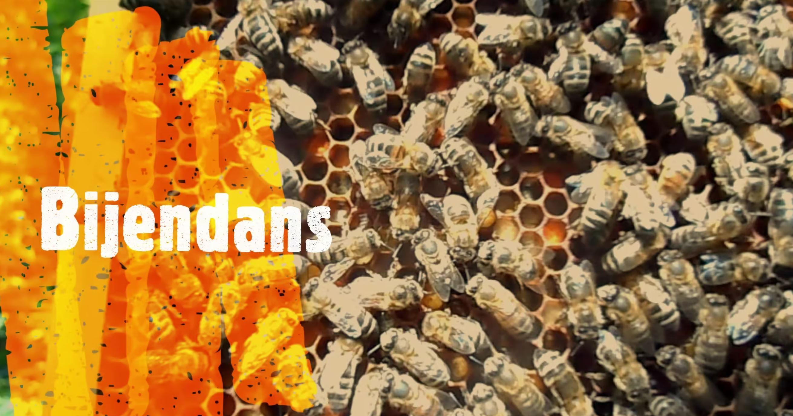 BEE IN BALANCE WEETJES - DE BIJENDANS