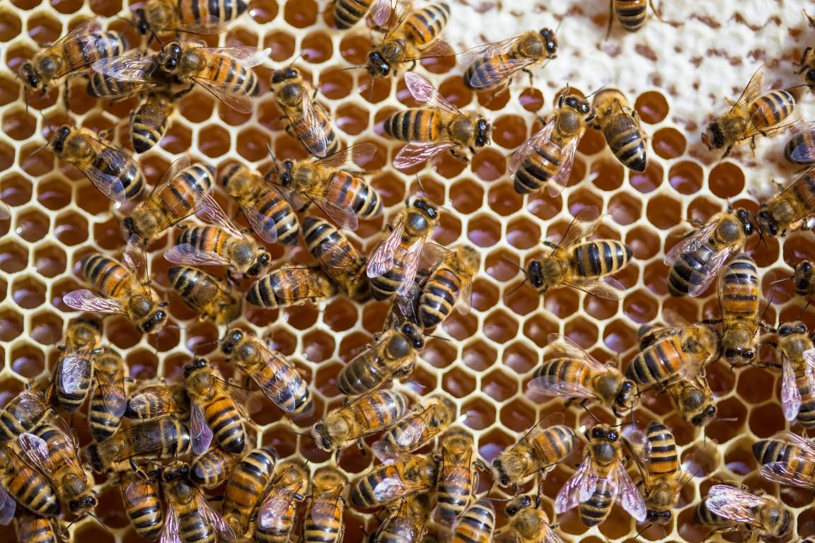 BEE IN BALANCE WEETJES – HEEL VEEL WERK VOOR EEN POT ECHTE HONING