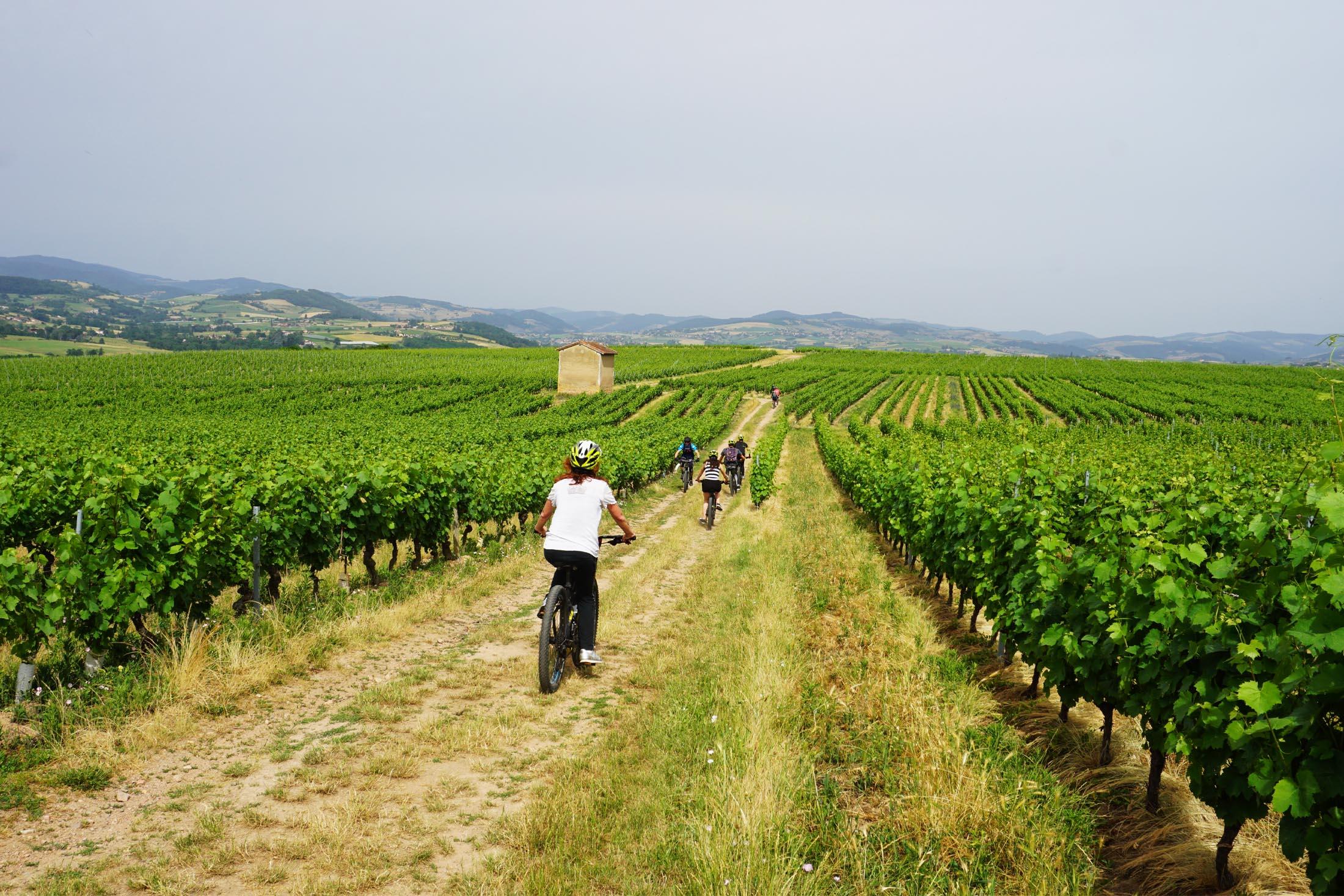 Balade en vélo dans les vignes du Beaujolais