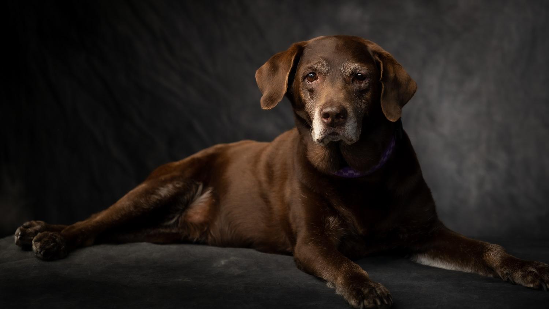Dog Portrait by Will Crockett