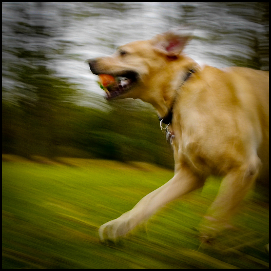 Family Dog Portrait by Will Crockett