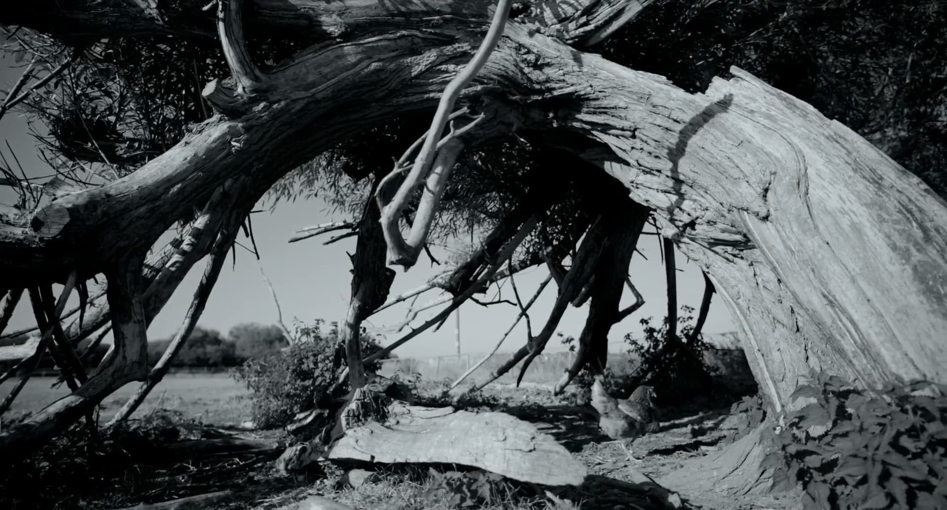 Рецензия на фильм «Гунда». Deaddinos - изображение 2