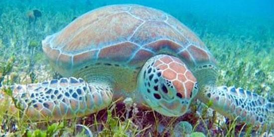 turtles-tintamarre