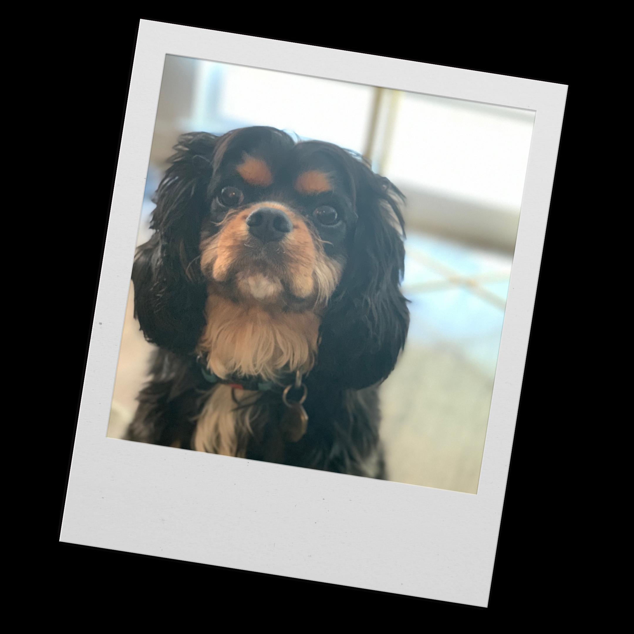 My dog, Louie's face