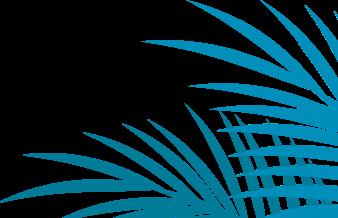 Palm leaves 2