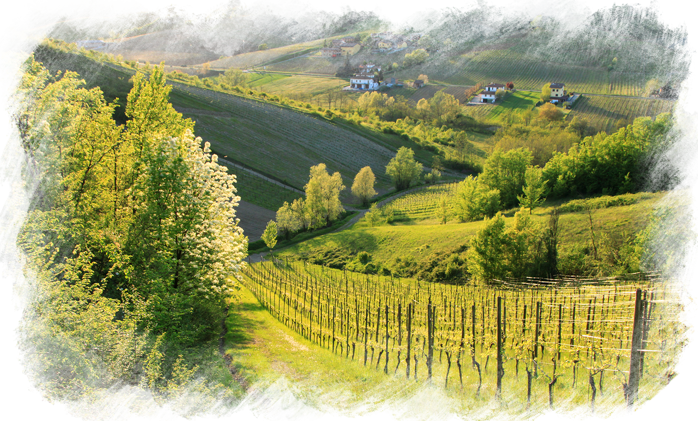 Colline della provincia di Piacenza