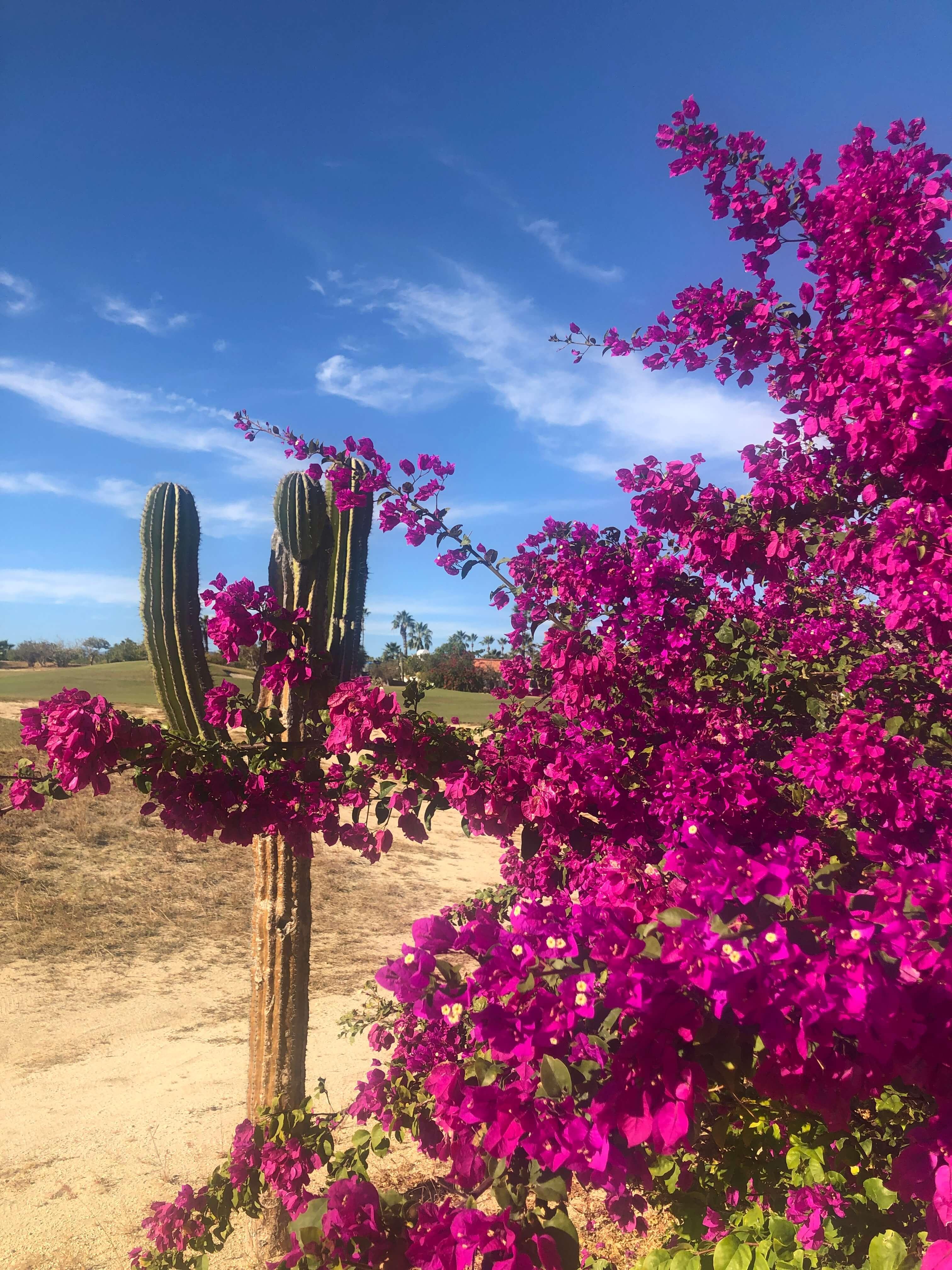 Megan-Reed-color-cactus
