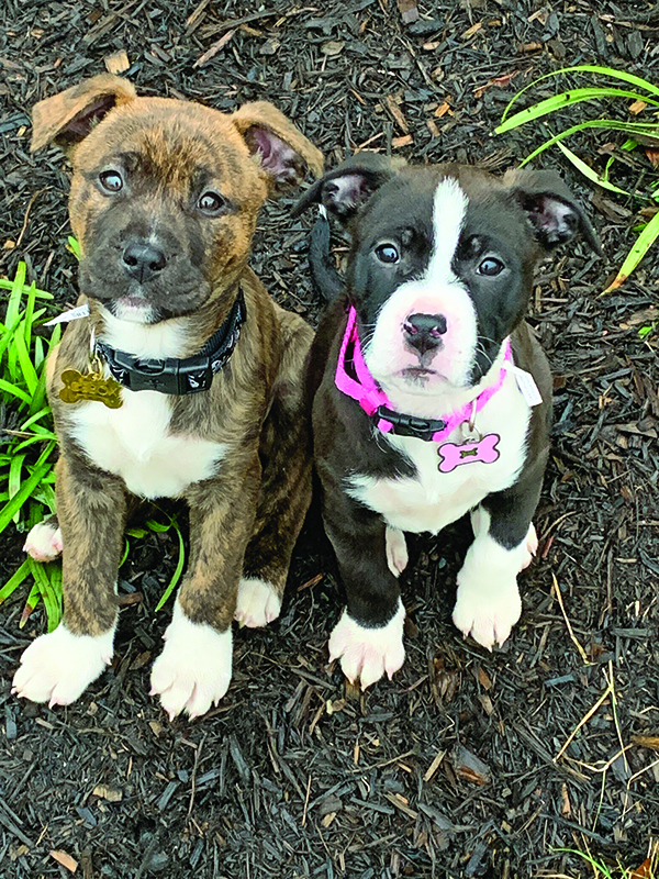 Are Two Pups Better Than One?