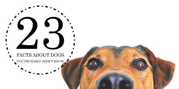 23 Facts About Dogs You Probably Didn't Know.