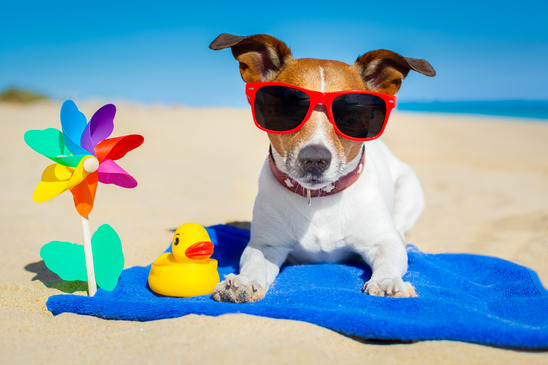 Summer is here and the weather is heating up!