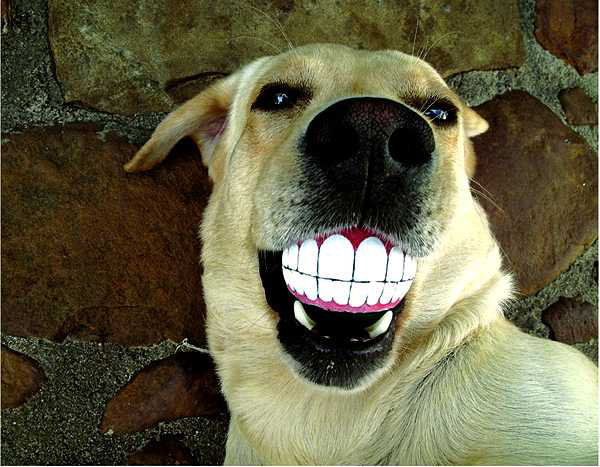 The importance of your pup's dental health