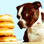 Food you should never feed your dog.