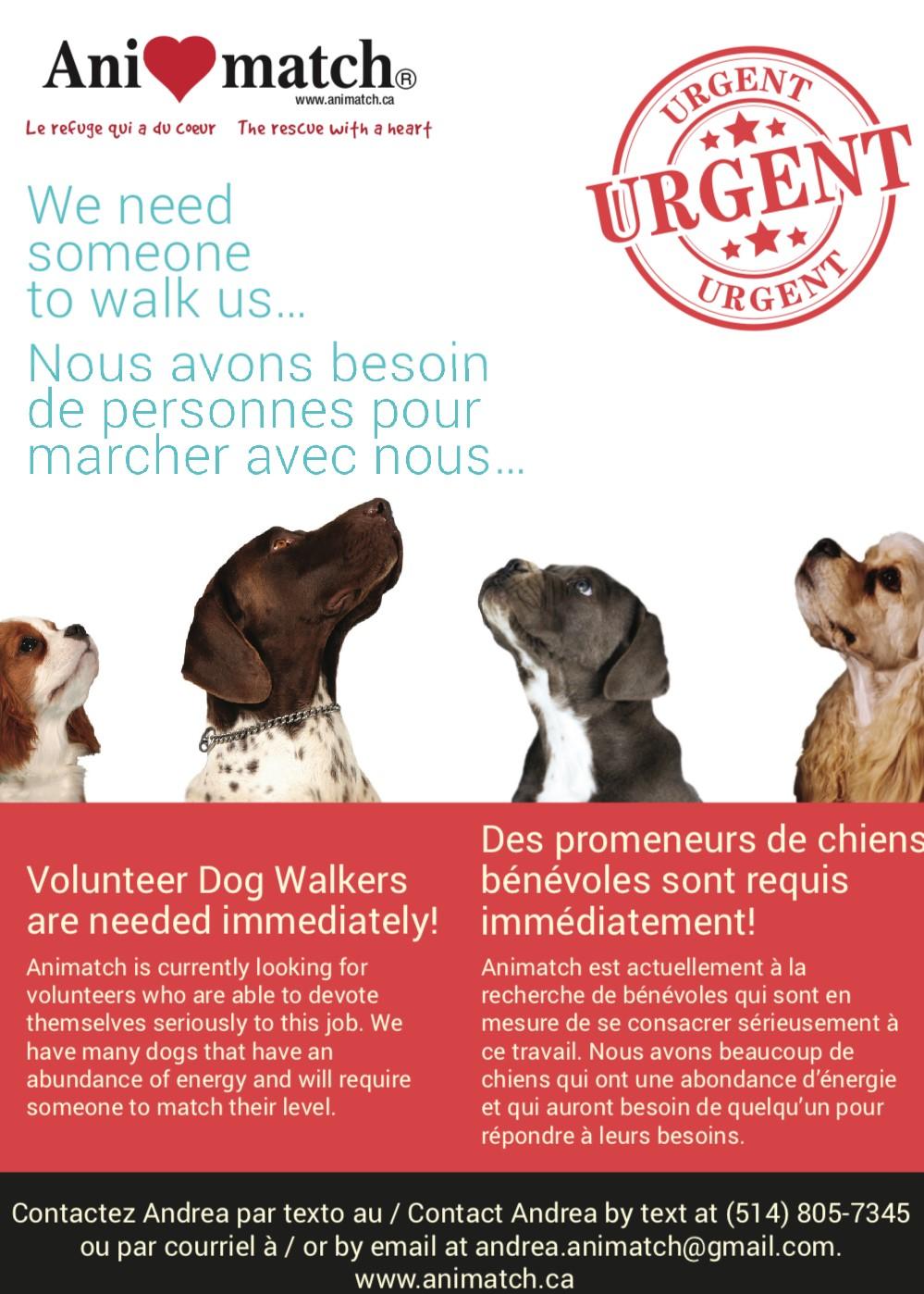Dog Walkers Needed