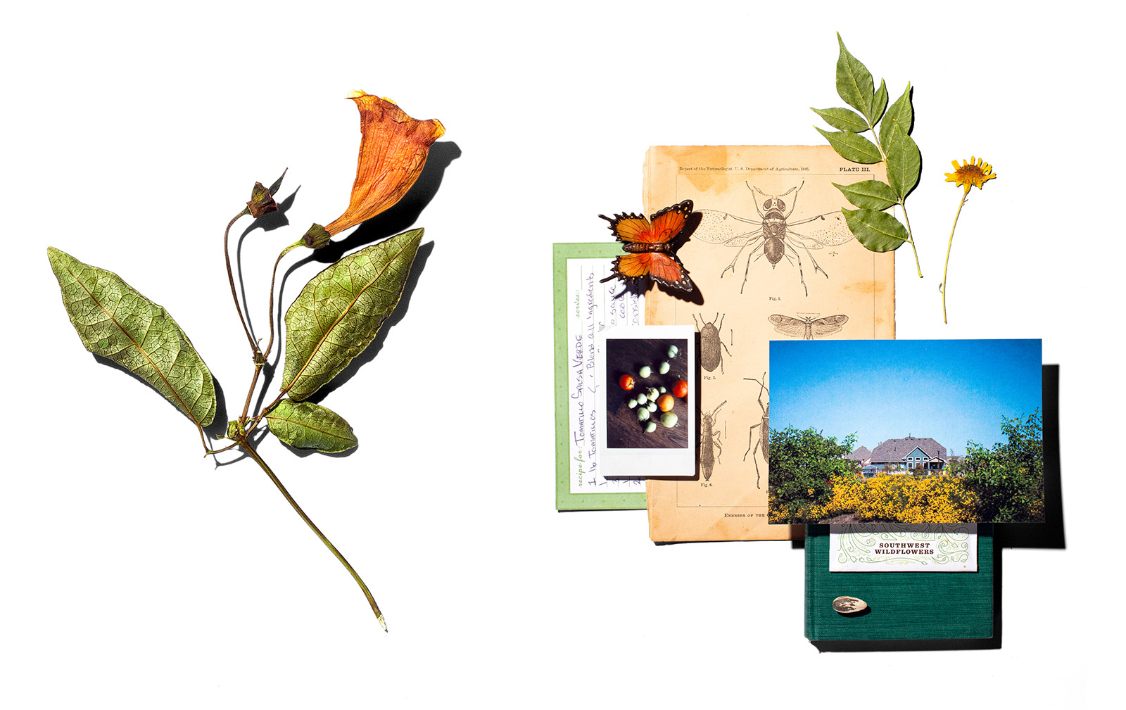 A loose collage of objects including a flower, a butterfly, dried leaves and a photograph of a home at The Crossvine.