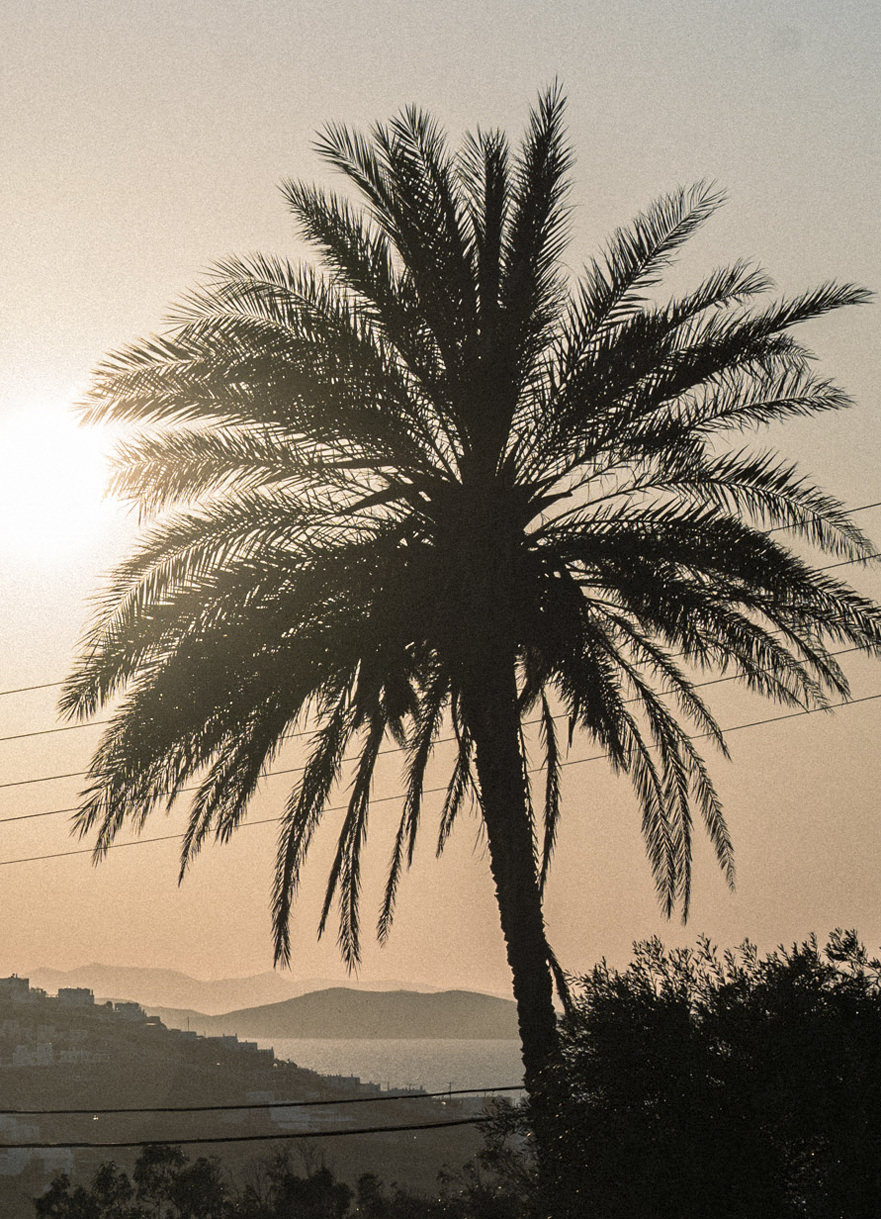sunset landscape exotic palm trees nature photography greece