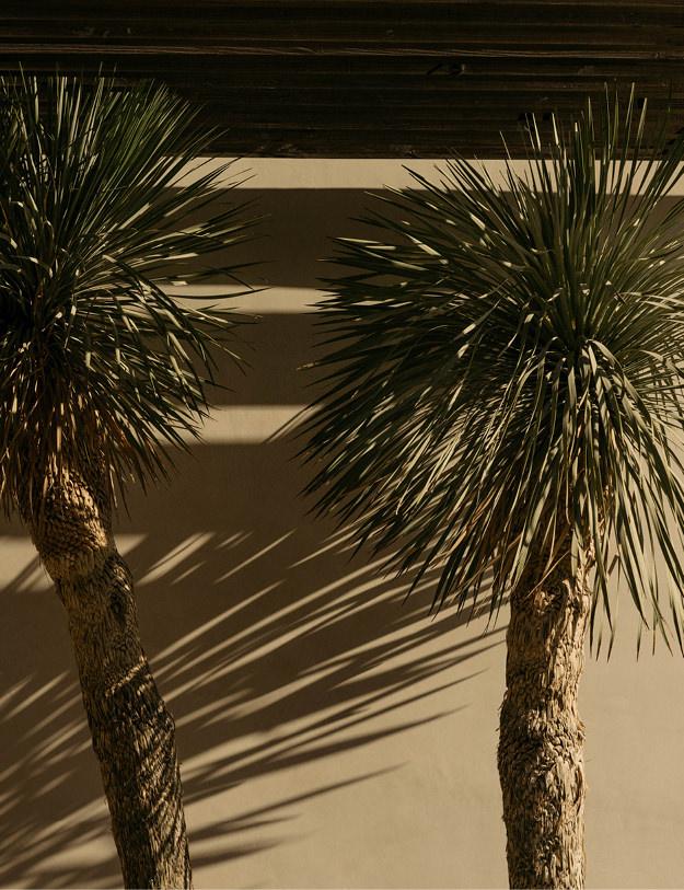 shadows of palm trees beautiful photography greece