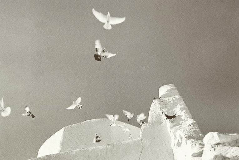 black and white photo of white doves white birds and white rocks flying up to the sky