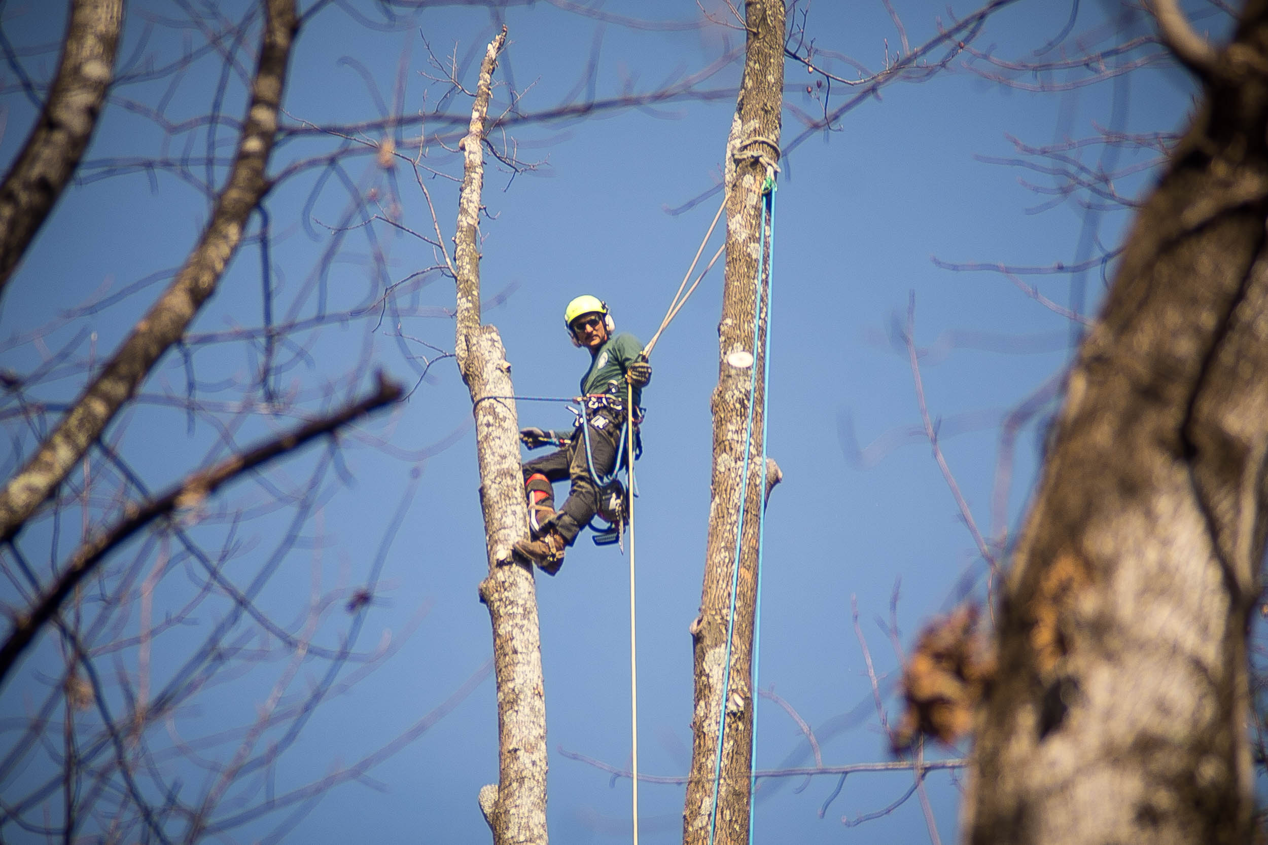 A Gunnison Tree professional high up in a tree