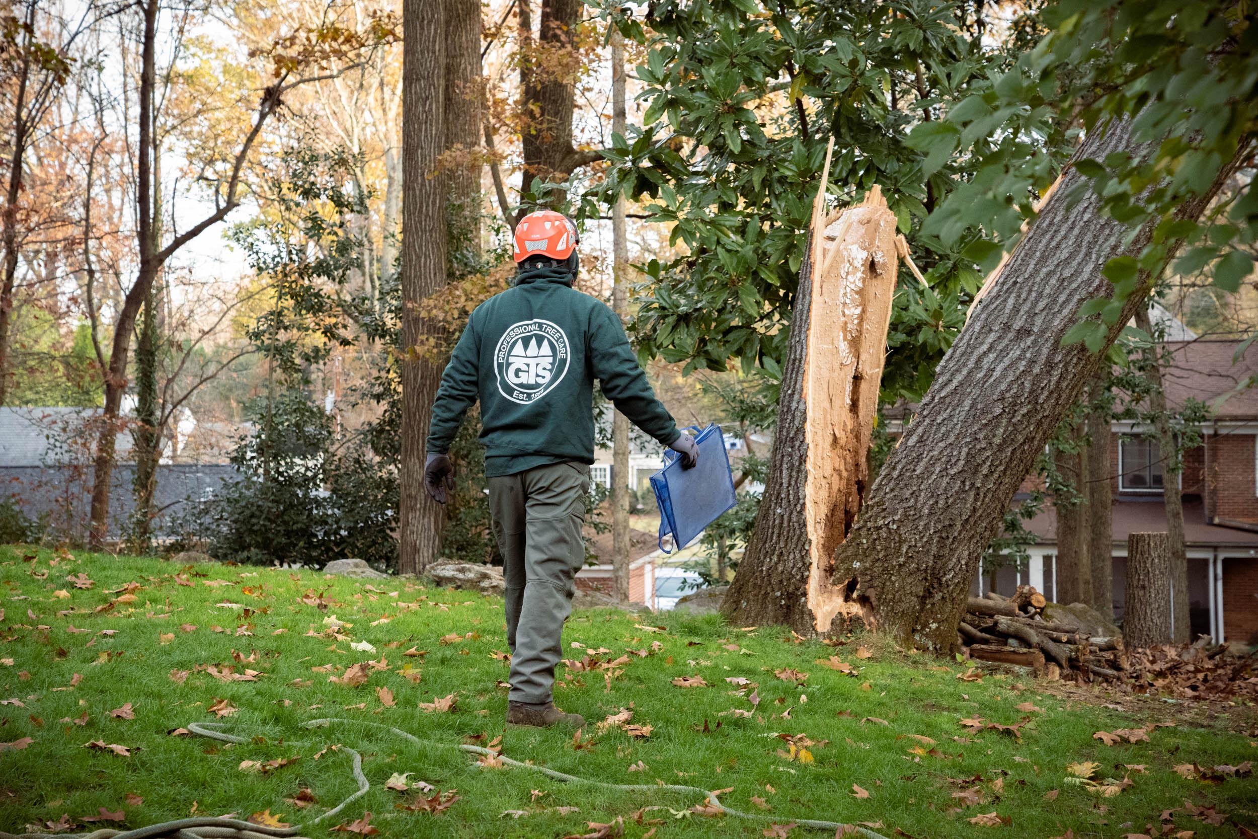 A Gunnison Tree professional walks toward a storm-damaged tree