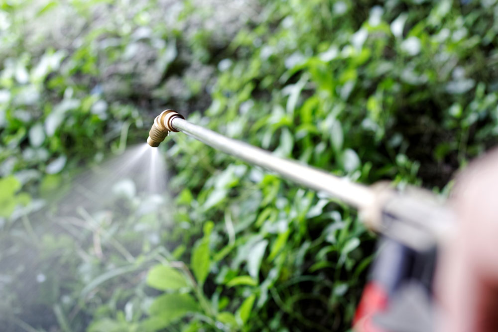 A Gunnison Tree professional sprays plant healthcare products