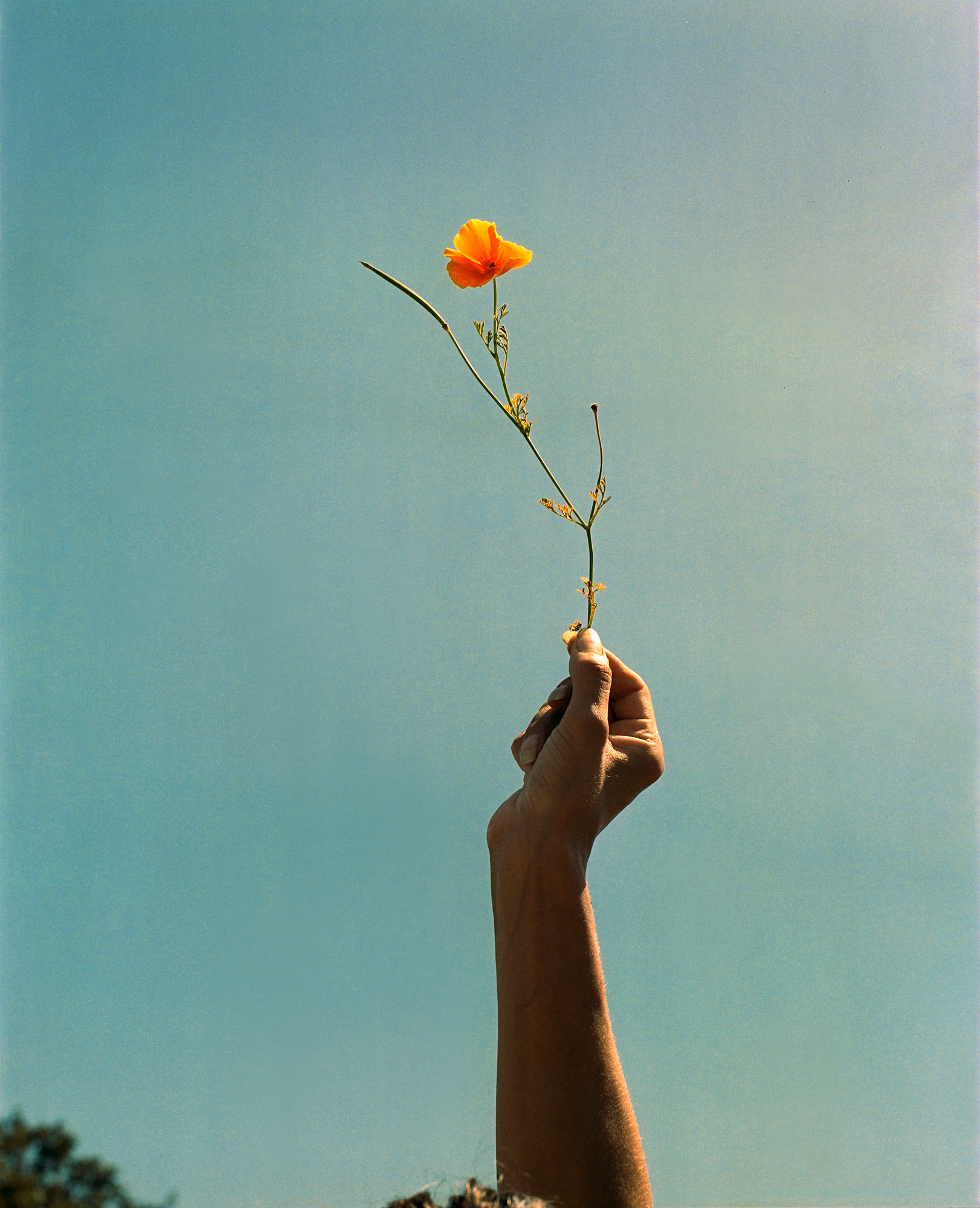 Louisa Holding Up A Californian Poppy Floral, Photography by ioannis Koussertari