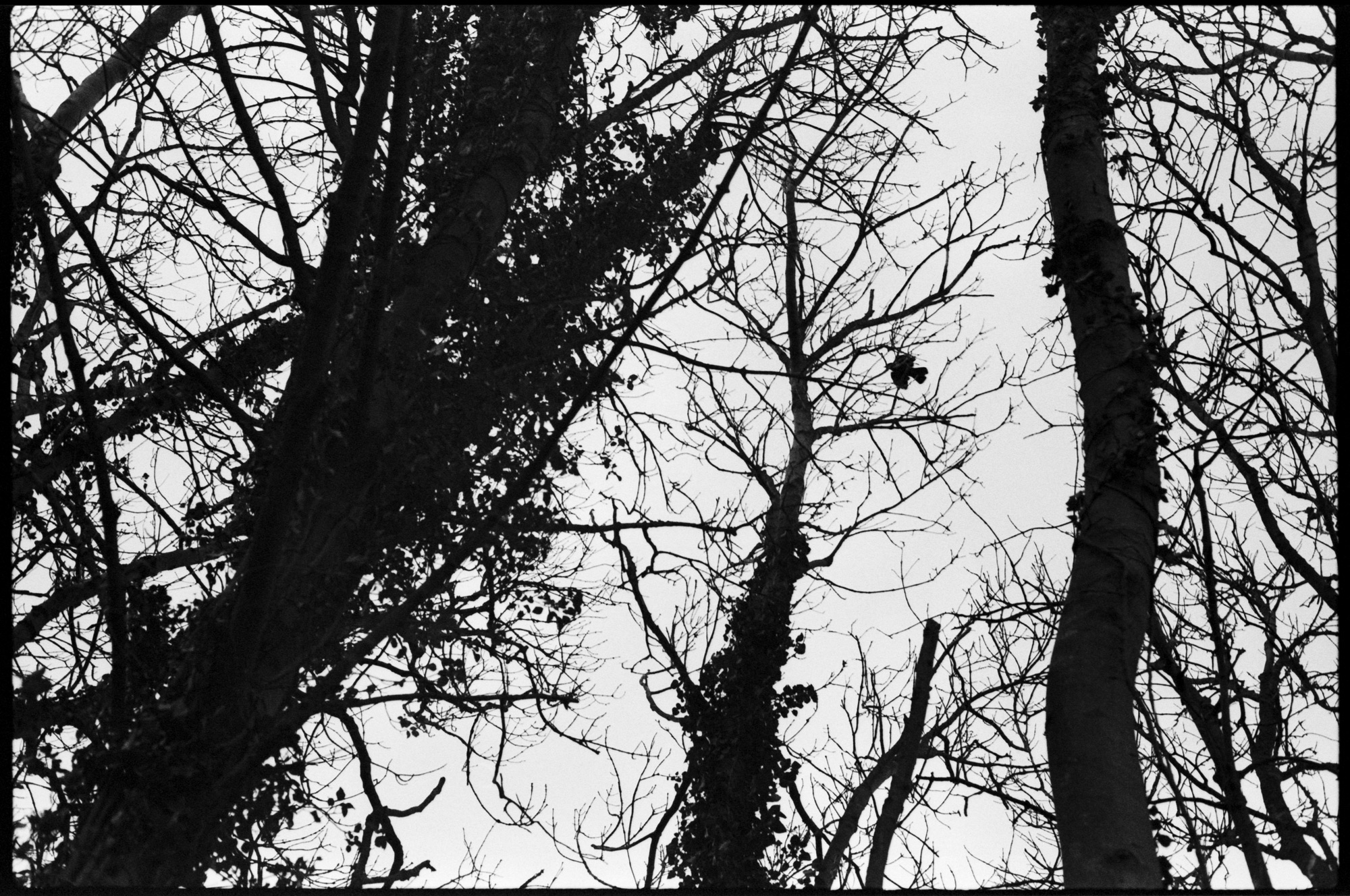 Through Trees, Observations Series, Photography By Ioannis Koussertari