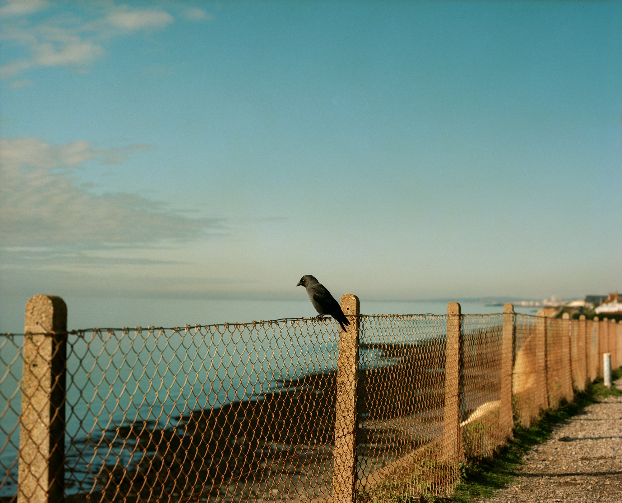 The Crow On The Fence, Observations Series, Photography By Ioannis Koussertari