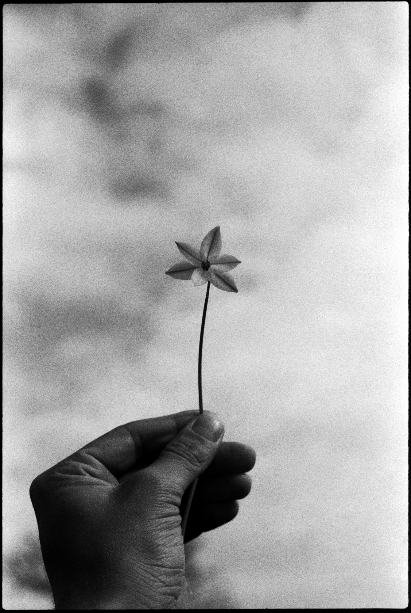 Holding up a flower, black and white photo on film by ioannis koussertari