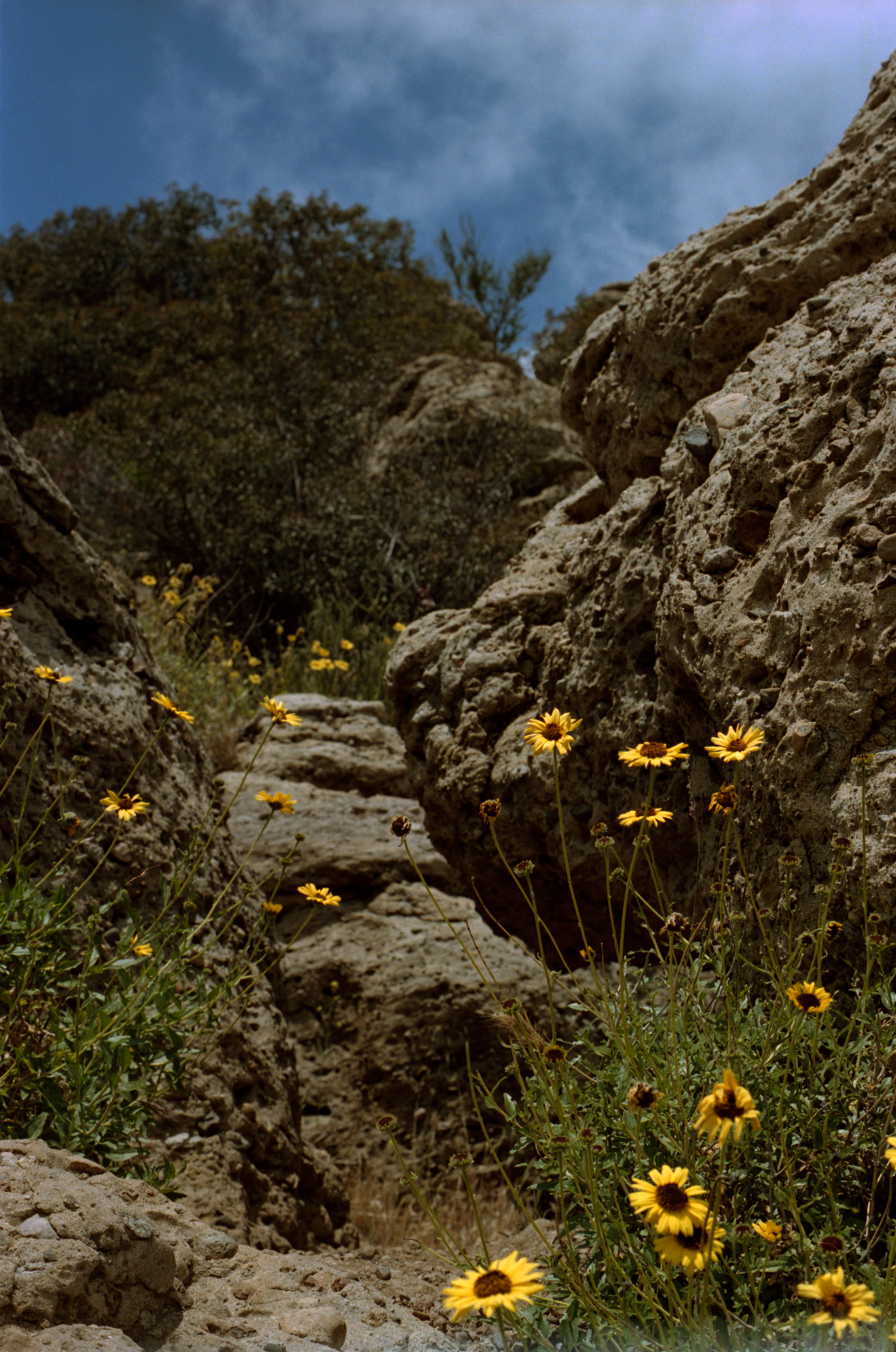Florals and rock formations,   Point Dume, Malibu, Omg Your English, Photography By Ioannis Koussertari
