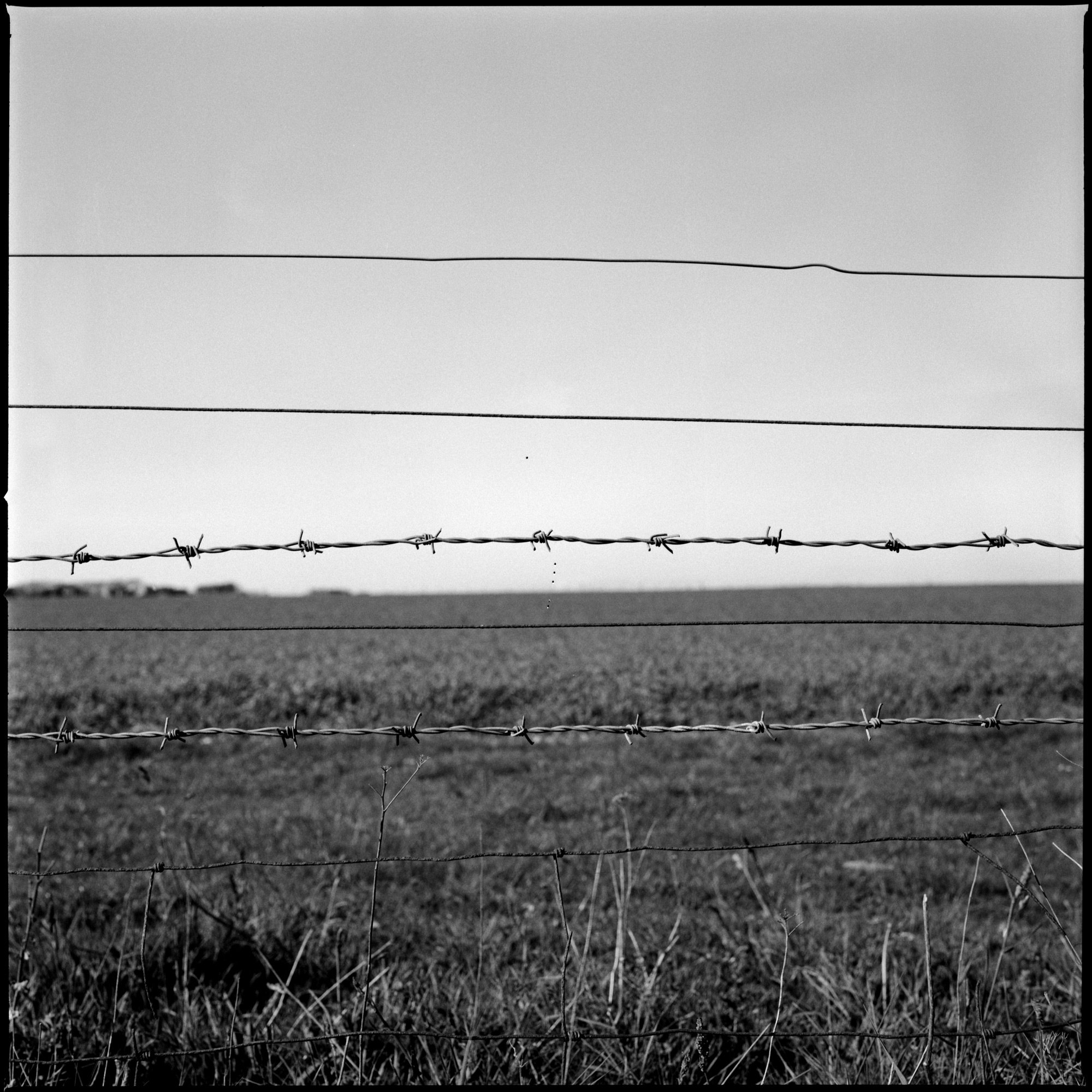 Barb Wire Fence, Observations Series, Photography By Ioannis Koussertari